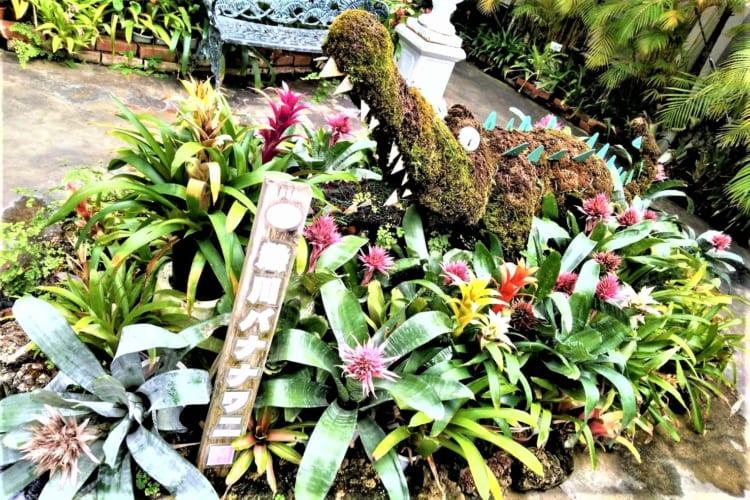 バナナワニ園 入口
