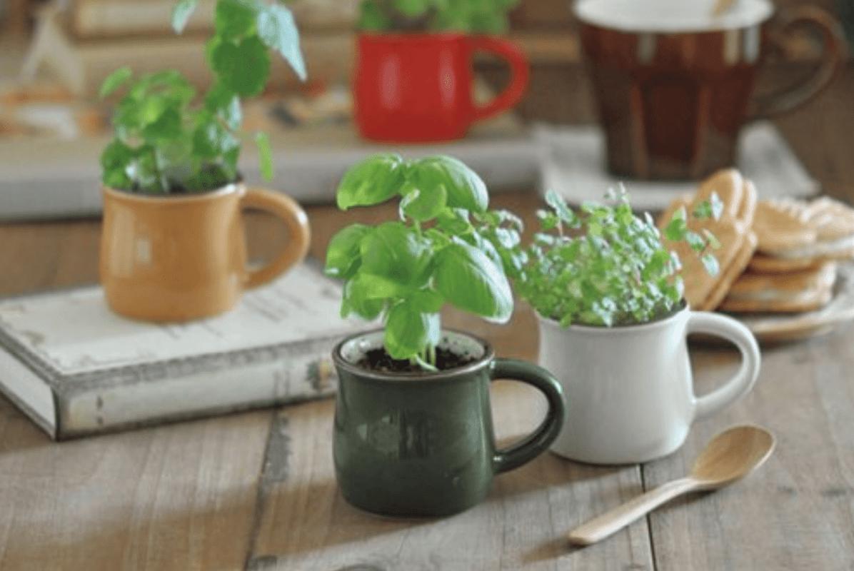 Verde Cafe イメージ
