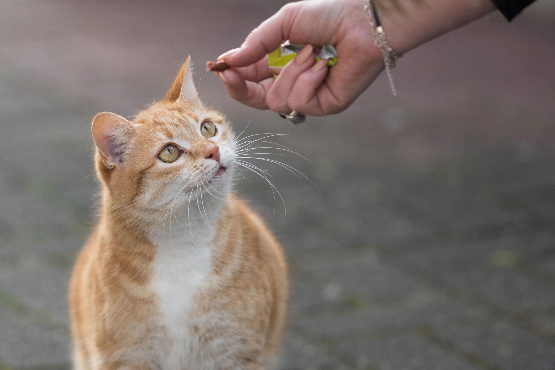 散歩道の猫